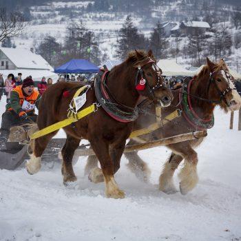 Zimná furmanská súťaž ťažných koní